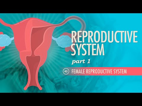 Reproductive System, part 1 - Female Reproductive System: Crash Course A&P #40 Mp3