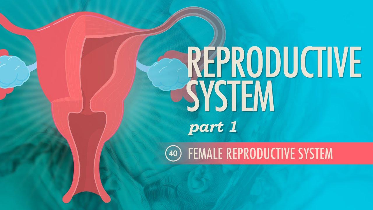 Reproductive System Part 1  Female Reproductive System Crash Course AP 40  YouTube