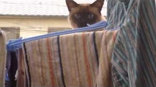 Приколы с кошками.РЖАКА Неудачный паркур кота!