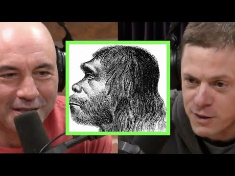 Joe Rogan & Steve Rinella on Neanderthals