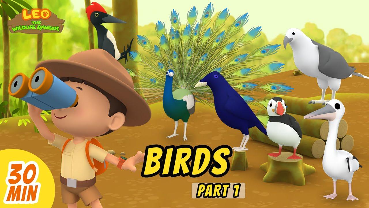 Birds Minisode Compilation (Part 1/2) - Leo the Wildlife Ranger   Animation   For Kids