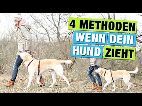 4-methods-|-teach-your-dog-to-walk-on-leash-&-stop-&-without-pulling