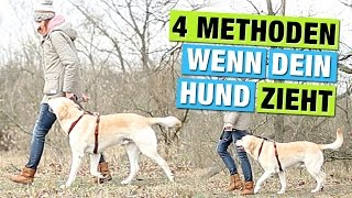 4 METHODEN zur Leinenführigkeit | Hund BEI Fuß beibringen | Hundeblog Hundeerziehung