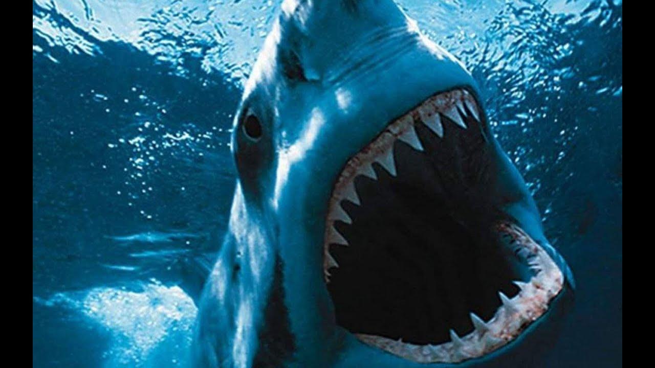Shark Deutsch