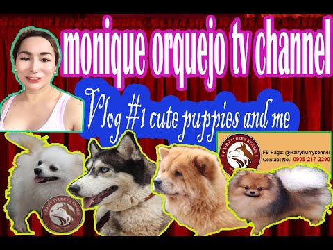 cute puppies and me  cheret cheret lang