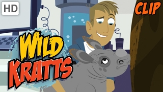 Wild Kratts - The Kratts