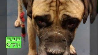 犬からの愛情を踏みにじるような悲劇が起きてしまいました。飼い主への...