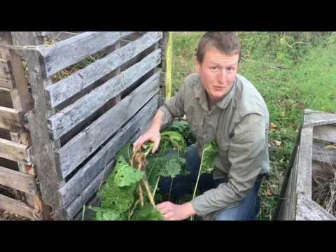 Dr. Petley - Harvesting Horseradish