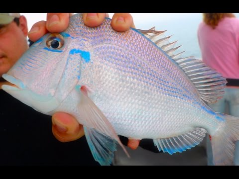 Deep Sea Fishing For Beautiful Tropical Fish!!! -(Gulf Of Mexico)