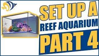How to Set Up a Reef Aquarium, Part 4: Selecting Fish & Coral