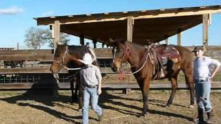 Rocco & Georgia - Gentle Quarter Horses