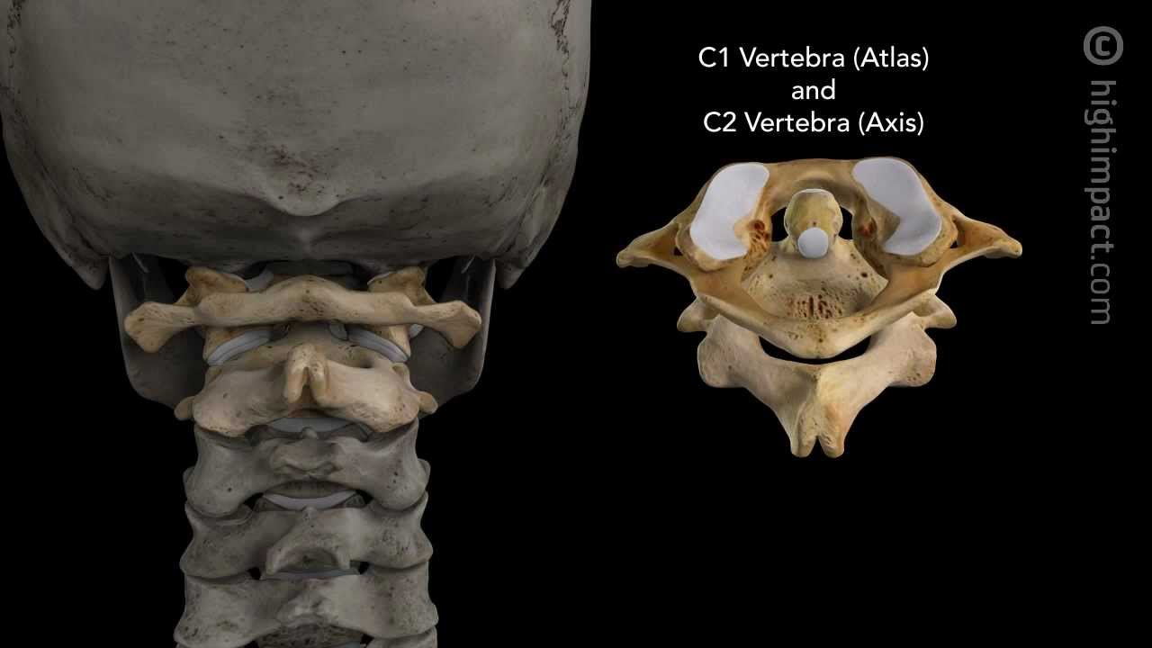 Normal Anatomy Of The Cervical Spine Youtube