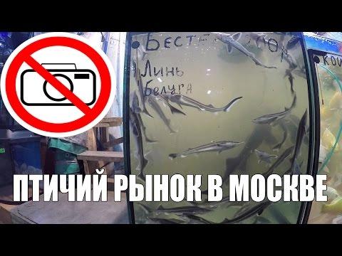 Птичий Рынок - Снимать Запрещено!