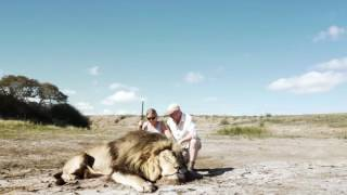Leon da buen susto a turistas, que se tomaban fotos con otro leon que habian casado