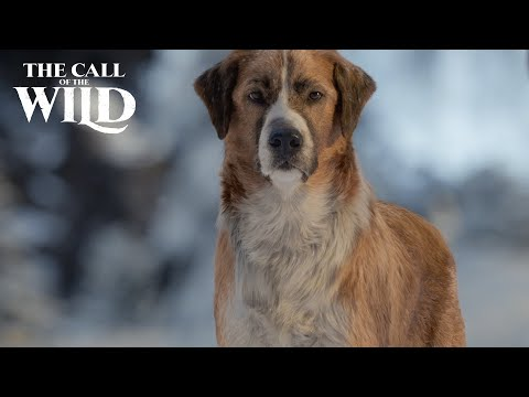 The Call of the Wild | Dogs of Disney Welcome Buck