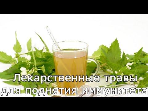 Лекарственные травы для поднятия иммунитета