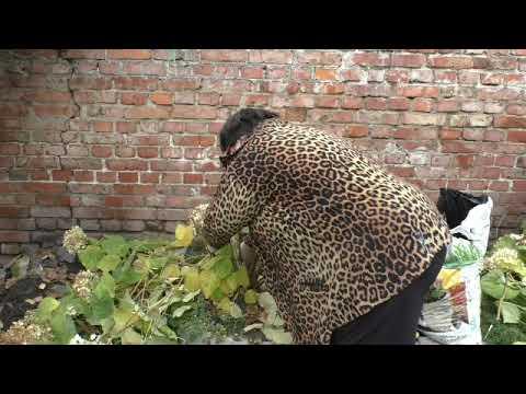 древовидная гортензия обрезка осенью
