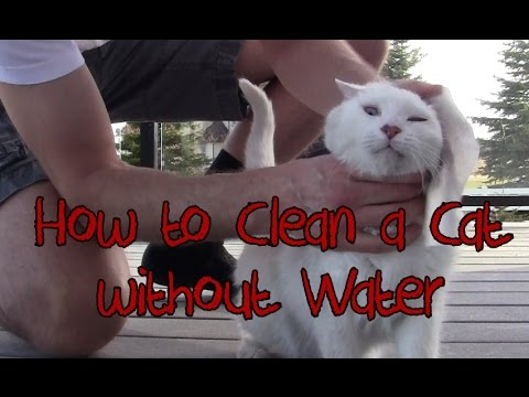 How to Groom, Wash & Bathe a Cat - Brushes and Wipes (no water)
