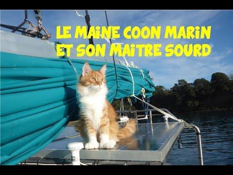 Les aventures d'un chat Maine Coon et de son maître sourd
