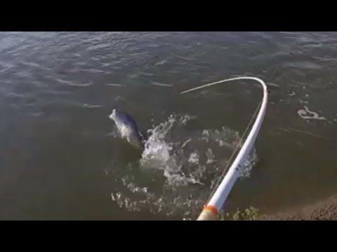 Redfish Limit In Less Than 10 Minutes!! Marsh Fishing Matagorda, Tx.