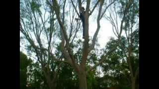 Belaying myself on a near by tree