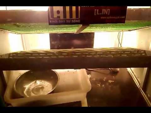 máy ấp trứng Lin 200 (citythaibinh - 0983244680)