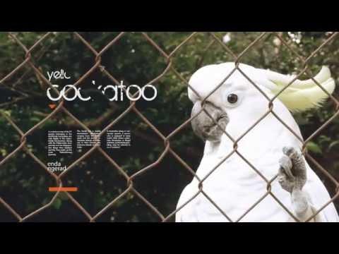 Zoo ( Kebun Binatang Bandung ) Indonesia