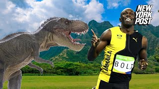 Could Usain Bolt outrun a T-rex? | New York Post