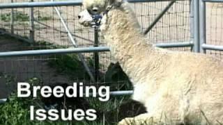 Alpacas & Alpaca Care Seminars with Dr. Steve Hull