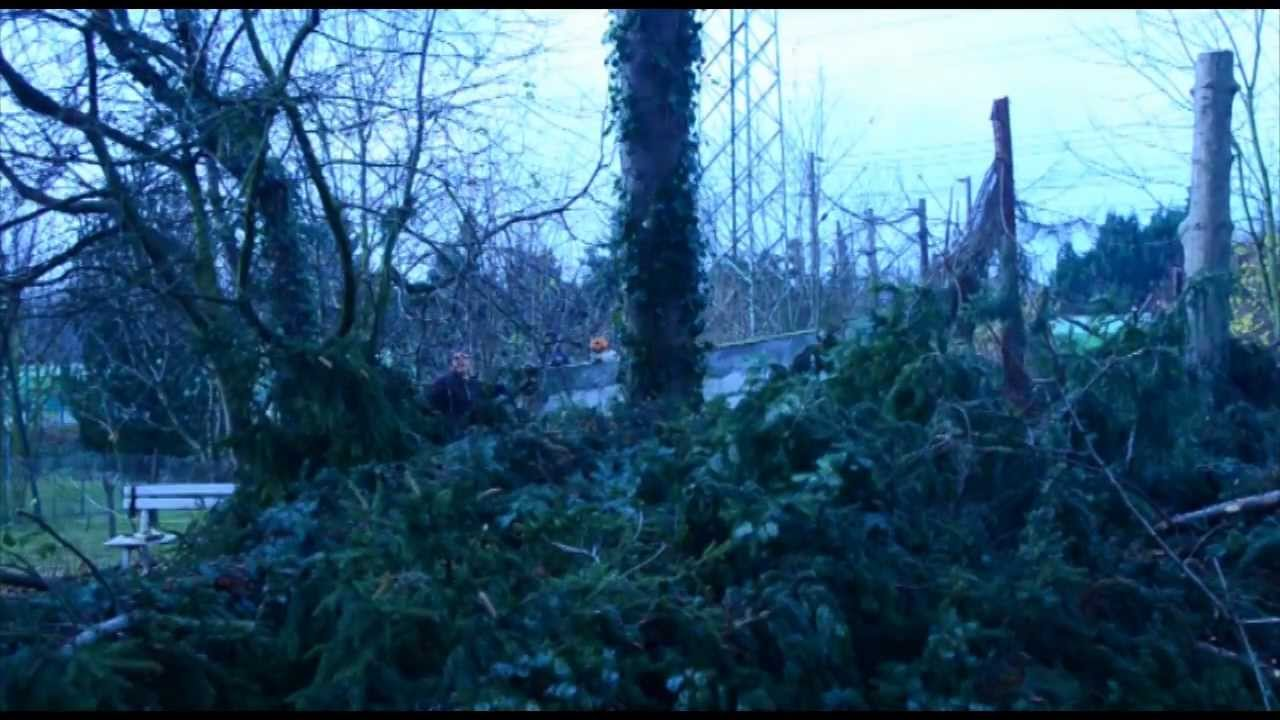 Kletterausrüstung Baum Fällen : Bäume im garten fällen seilklettertechnik baumschnitt profi huss