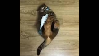 Коту кинули рыбу. ЧТО ОН СДЕЛАЕТ? | cat caught fish. what will he do next?