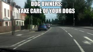 [belfast Drivers] Psa: Take Care Of Your Dog.