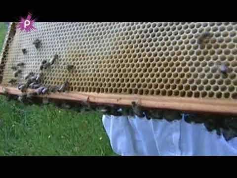 un apiculteur veut sauver les abeilles youtube. Black Bedroom Furniture Sets. Home Design Ideas