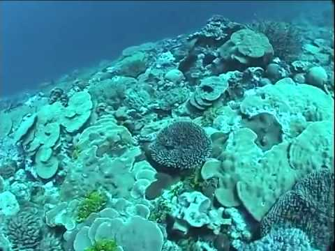 Kingman Reef   Line Islands   Central Pacific Ocean