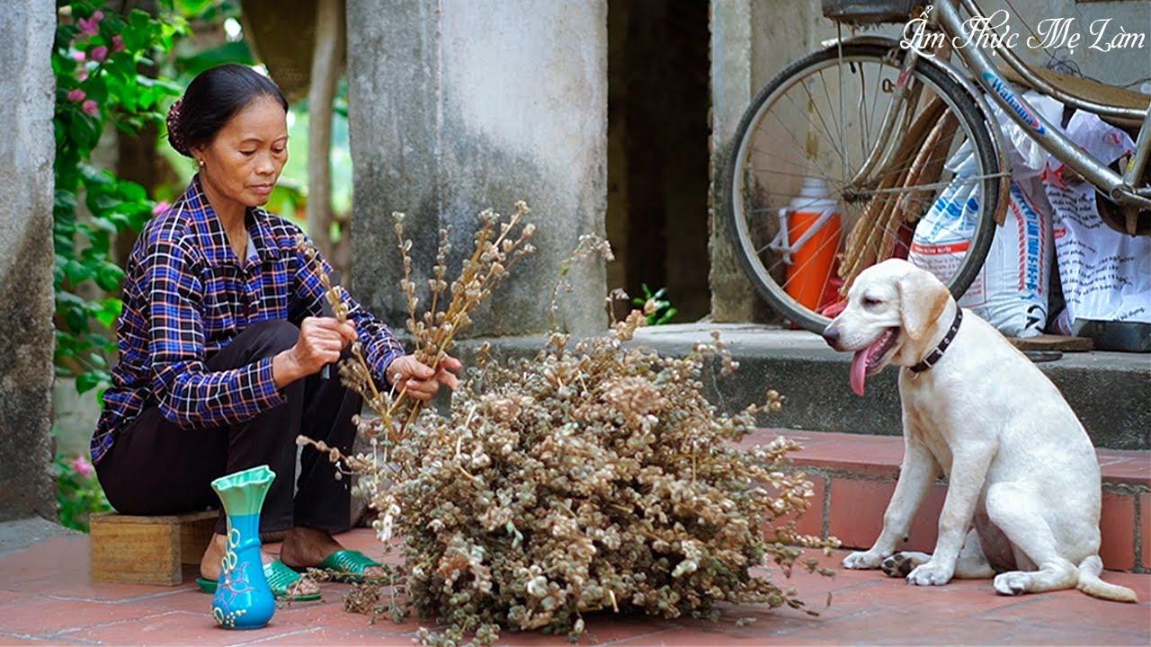 Thu hoạch vừng mẹ làm các món ngon từ vừng ( The Life Of Sesame ) I Ẩm Thực Mẹ Làm