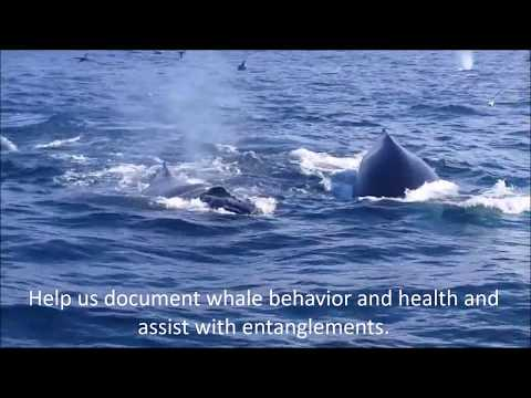 Blue Ocean Society for Marine Conservation: How Your Support Helps