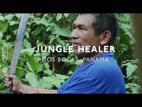 Searching for Cures in the Panamanian Jungle