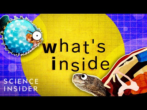What's Inside These 8 Unique Creatures?