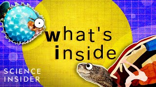 Download What's Inside These 8 Unique Creatures Mp3 and Videos