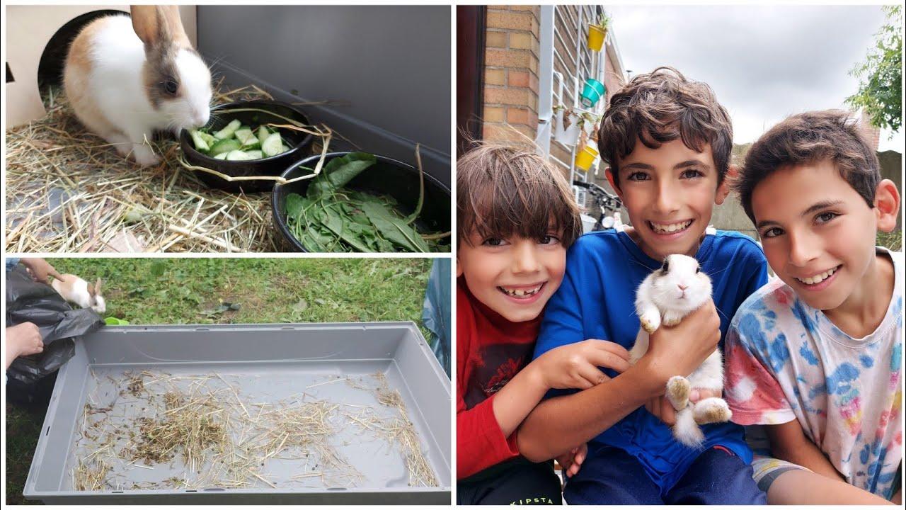 Limpiar la jaula de conejo: nuestra nueva tarea y nuestra nueva mascota