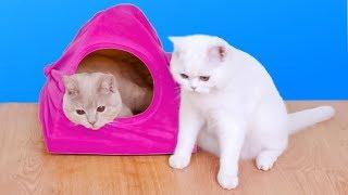 8 Замечательных Идей Для Владельцев Кошек