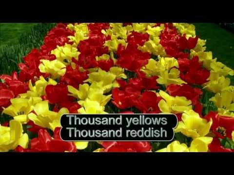 Tulips from Amsterdam English karaoke version