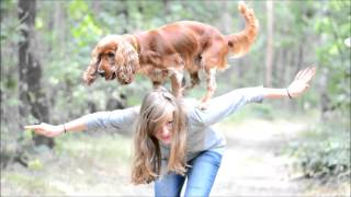 Amazing Cocker Spaniel Scooby - Tricks & Agility