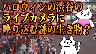 渋谷のライブカメラに映り込んで動かない 謎の着ぐるみがライブカメラに向かって何かを アピールしているように見えます。 去年は軽トラを横...