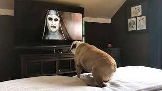 もし、最恐のホラー映画「THE NUN」の予告編をブルドッグが観たら?