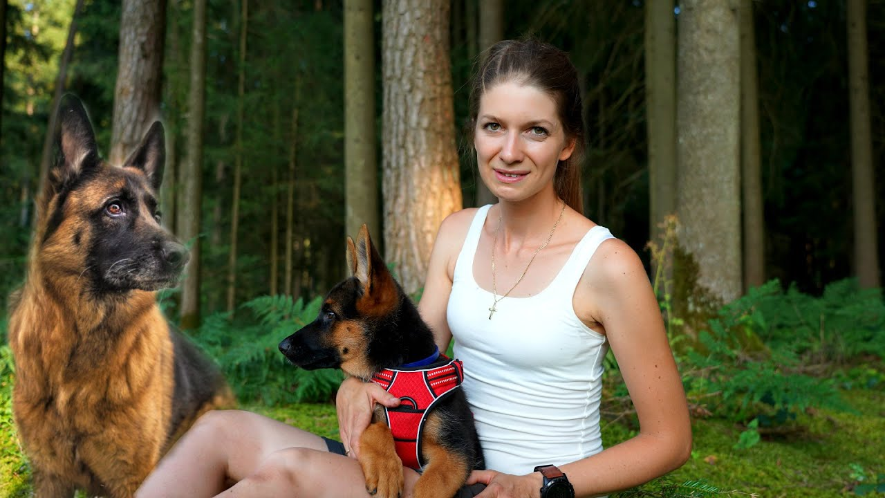 Schutzhund - ein neuer Begleiter auf vier Pfoten ⚠️ Das ist Aika