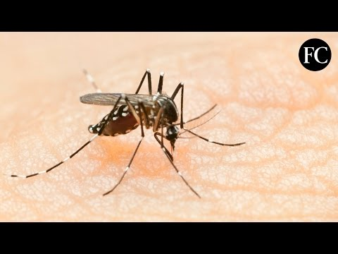 How Have We Prepared For The Zika Virus?