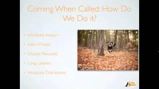 Merrick Pet Care's Dogington University Treats N' Training: Solving Common Behavior Problems