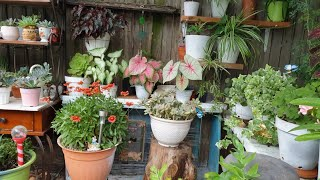 Como Logro Tener un Jardin Hermoso? Así Trabajo Para Cuidar Mi Jardin 👩🌾 #jardineria