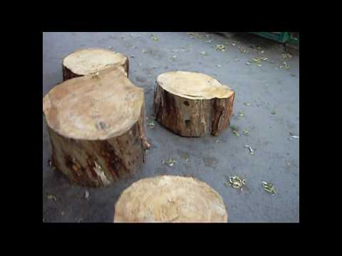 Как узнать возраст дерева